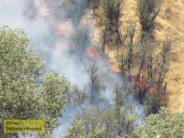 آتش سوزی کوهدشت